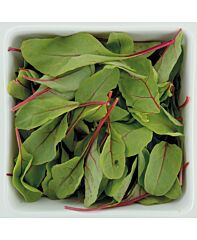 Red chard (baby leaf)