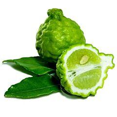 Limes kaffir